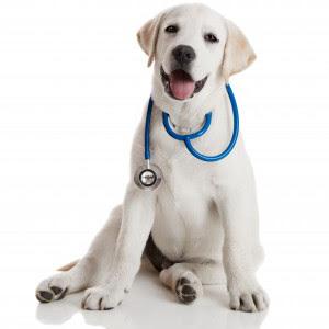 dog_doctor