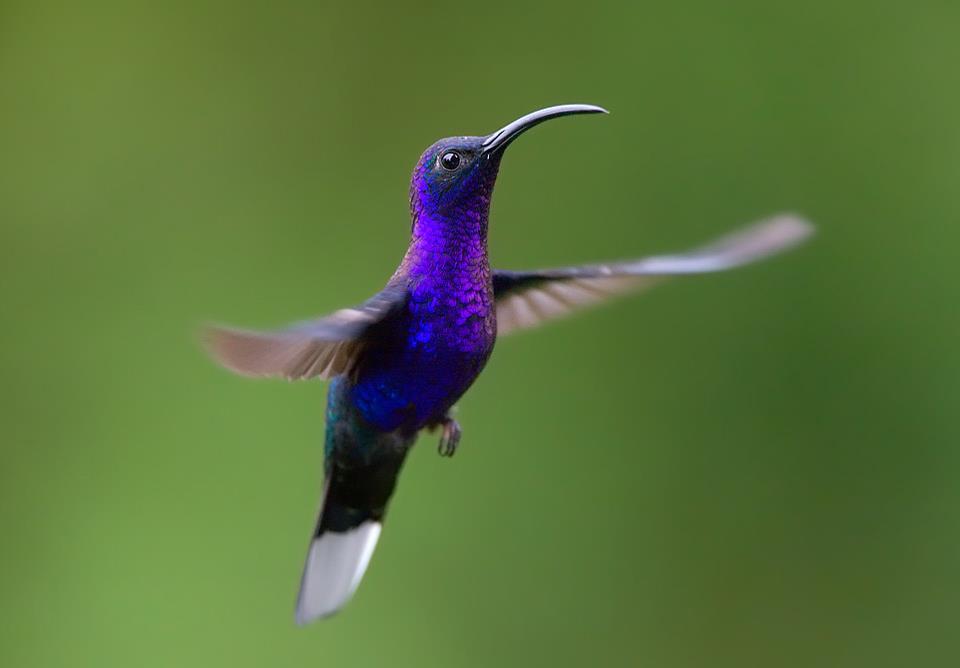 colibrí | Creacion de Empresas y Emprendedores